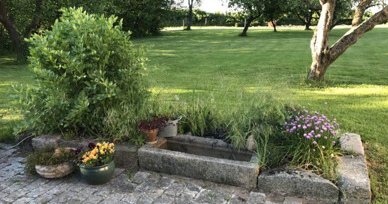 Havedrømme og planlægning af køkkenhaven